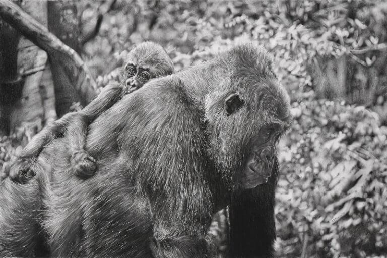 Graphite drawing of mother and infant gorillas at the Bronx Zoo in New York.